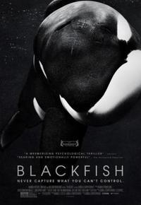 Blackfish 916683539 mmed
